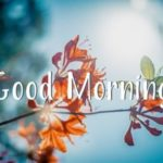 nature good morning images photo wallpaper pictures pics download
