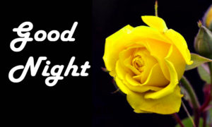 Yellow rose good night images wallpaper photo pictures free download