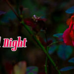 Beautiful red rose good night images wallpaper pictures free hd download