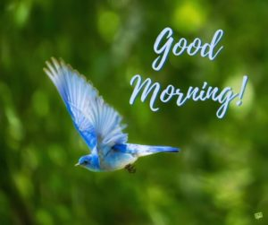 bird good morning images photo wallpaper download