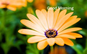 flower good morning images pics wallpaper download
