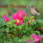 bird good morning images photo pictures free download