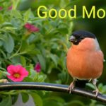bird good morning images pics wallpaper photo hd