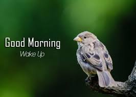 bird good morning images photo pictures free hd