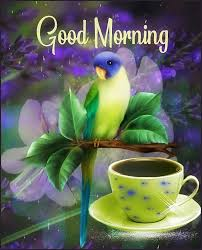 bird good morning images wallpaper photo for whatsapp download