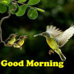 bird good morning images photo pics pictures free hd