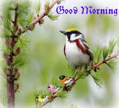 bird good morning images for whatsapp pictures photo