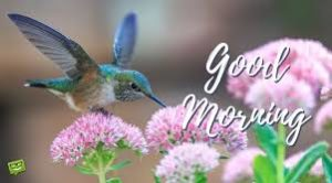 bird good morning images pics for girlfriend pictures wallpaper download