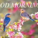 bird good morning images for lover pictures photo download
