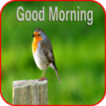 bird good morning images photo wallpaper free hd download
