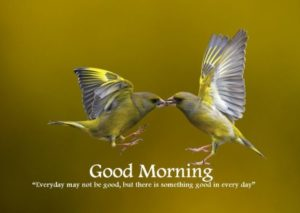 bird good morning images pics wallpaper pictures free hd