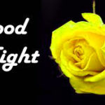 Yellow rose good night images wallpaper pictures photo free Download