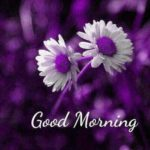 flower good morning images pictures wallpaper download