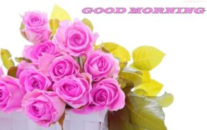 flower good morning images pictures wallpaper photo free download