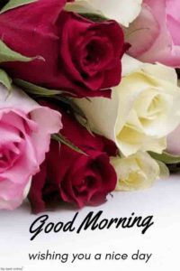 nice good morning images wallpaper photo download