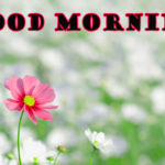 good morning images photo wallpaper pics download hd