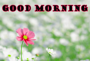 flower good morning images wallpaper pictures photo hd