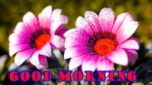 flower good morning images photo wallpaper pictures free download