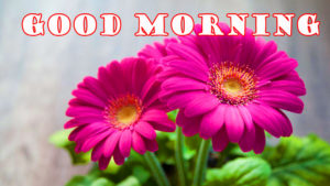 flower good morning images pics photo wallpaper download