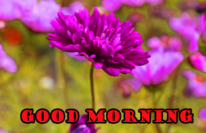 flower good morning images photo pics photo hd