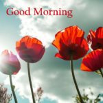 flower good morning images pictures wallpaper photo download