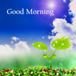 Latest nature good morning images photo wallpaper pics download
