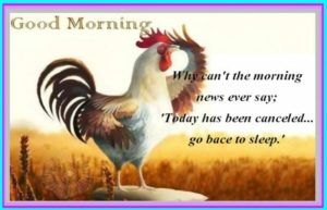 funny good morning images pictures photo wallpaper free hd download
