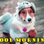 funny good morning images pictures photo wallpaper free download hd