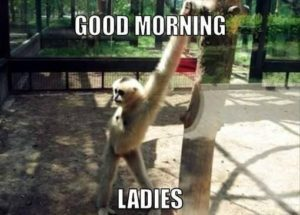 funny good morning images wallpaper photo pics for whatsapp