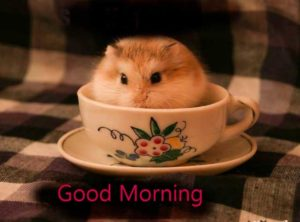 funny good morning images wallpaper pictures photo free download