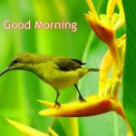 bird good morning images photo wallpaper pics hd
