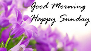 latest nice good morning happy Sunday wallpaper photo hd download