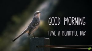 bird good morning images pictures photo hd download