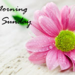 nice love good morning happy Sunday wallpaper pics download