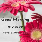 flower good morning images photo wallpaper pictures pics hd for whatsapp