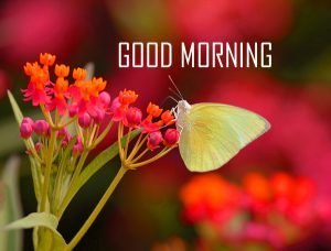 love good morning images photo wallpaper free download