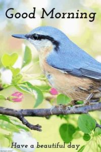 bird good morning images pictures photo free download hd