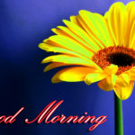 new beautiful good morning images photo wallpaper pics download