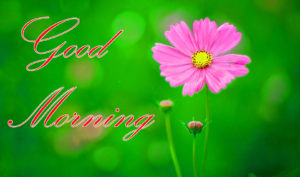 good morning images pictures wallpaper photo download