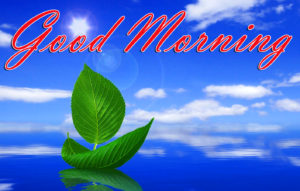 2019 good morning images pictures photo wallpaper download