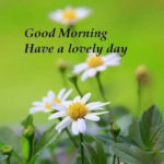 latest beautiful good morning images pictures photo download