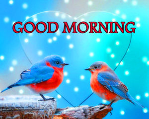 bird good morning images pictures photo wallpaper hd