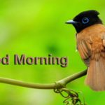 bird good morning images wallpaper pictures photo hd