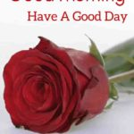 Red rose good morning images photo wallpaper download