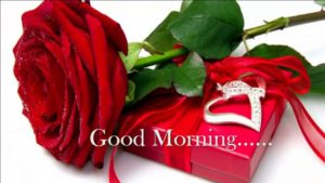 Red rose good morning images pics photo download