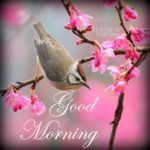bird good morning images pics photo free hd