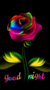 Rose good night images wallpaper pictures photo hd download