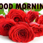 Red rose good morning images wallpaper pictures download