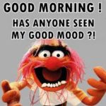 funny good morning images wallpaper pictures photo hd download