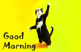 best funny good morning images pics photo wallpaper free hd